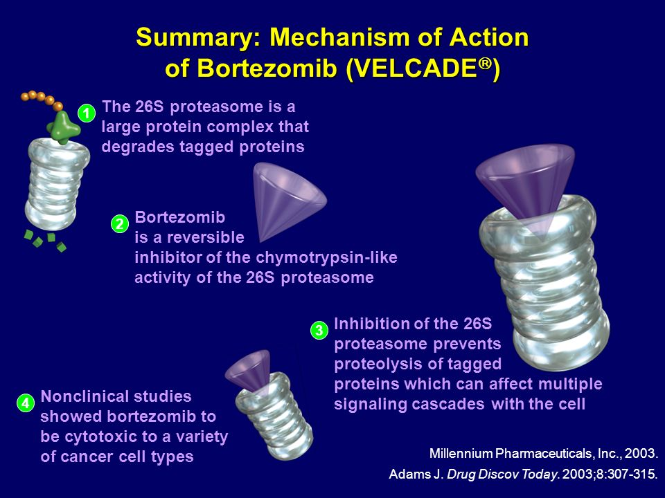 Summary: Mechanism of Action of Bortezomib (VELCADE)