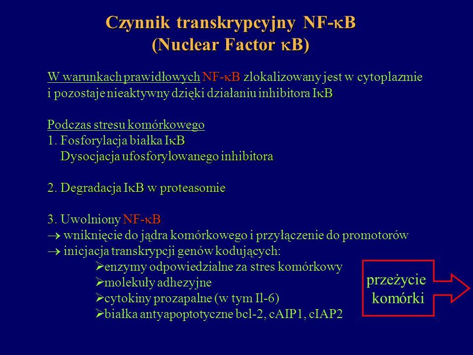 Czynnik transkrypcyjny NF-B (Nuclear Factor B)