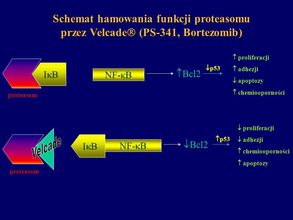 Schemat hamowania funkcji proteasomu przez Velcade (PS-341, Bortezomib)