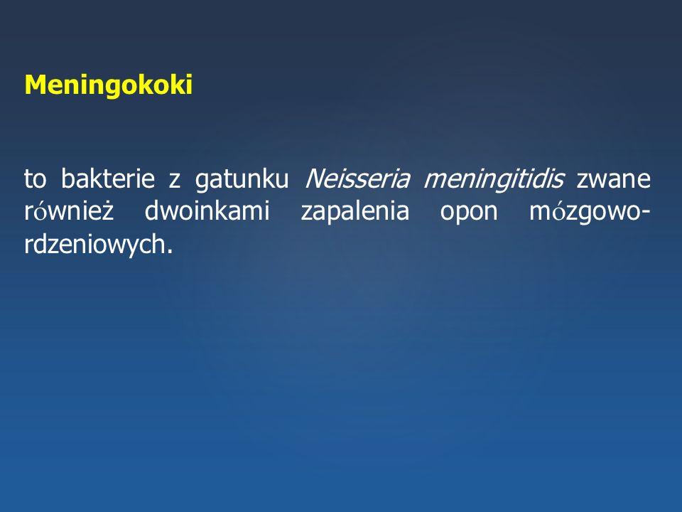 Meningokoki to bakterie z gatunku Neisseria meningitidis zwane również dwoinkami zapalenia opon mózgowo-rdzeniowych.