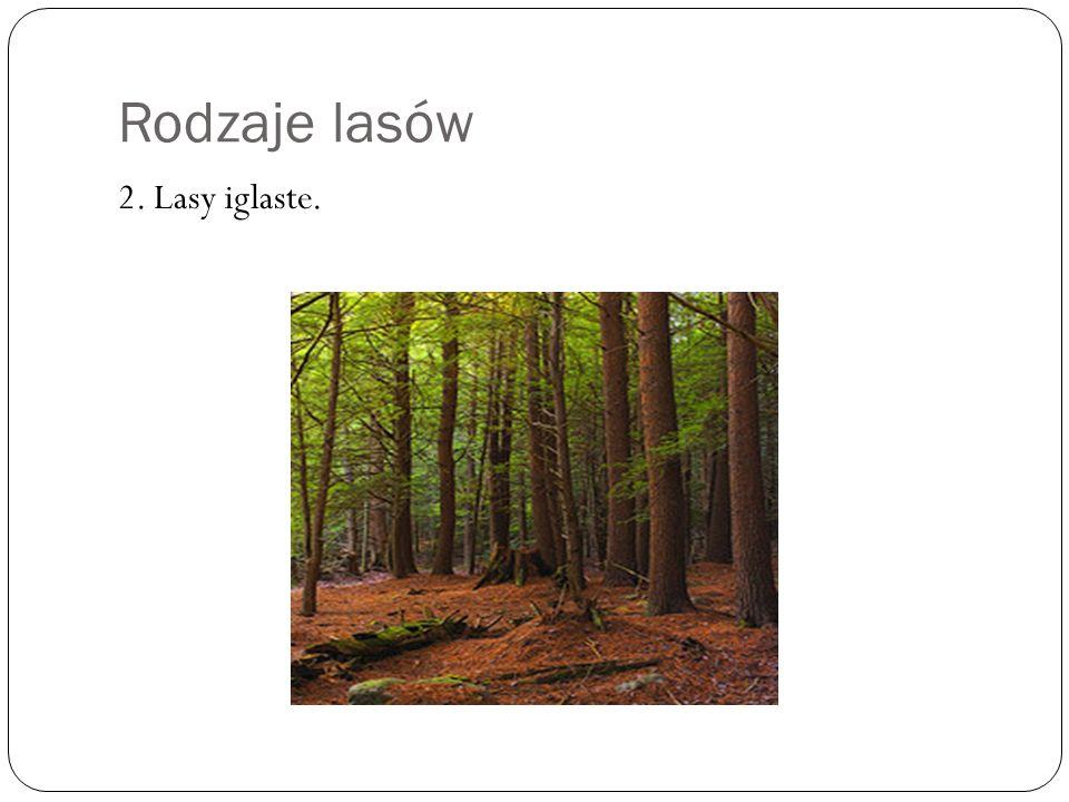 Rodzaje lasów 2. Lasy iglaste.
