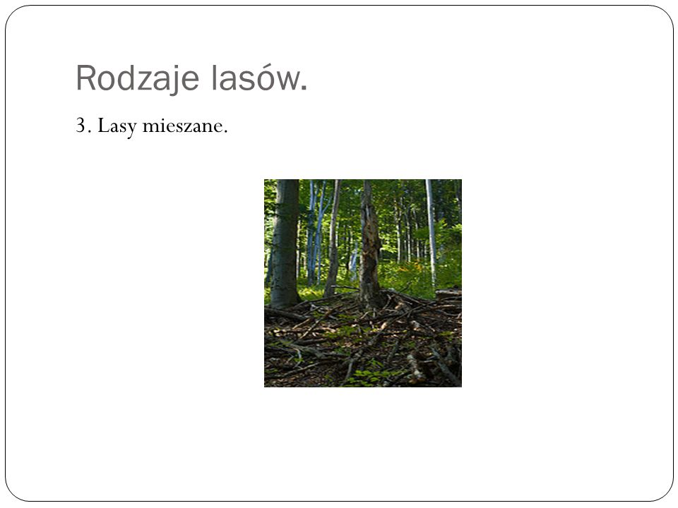 Rodzaje lasów. 3. Lasy mieszane.