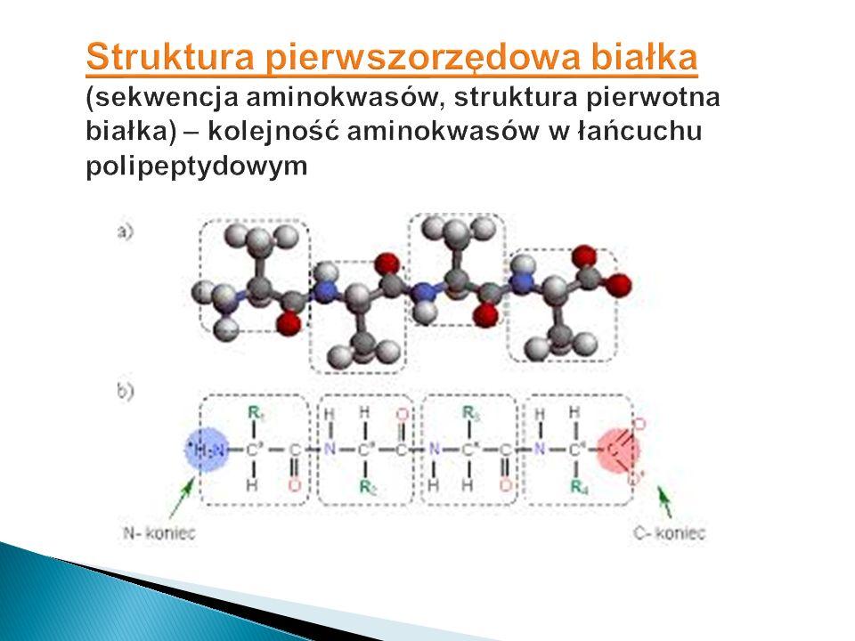 Struktura pierwszorzędowa białka (sekwencja aminokwasów, struktura pierwotna białka) – kolejność aminokwasów w łańcuchu polipeptydowym