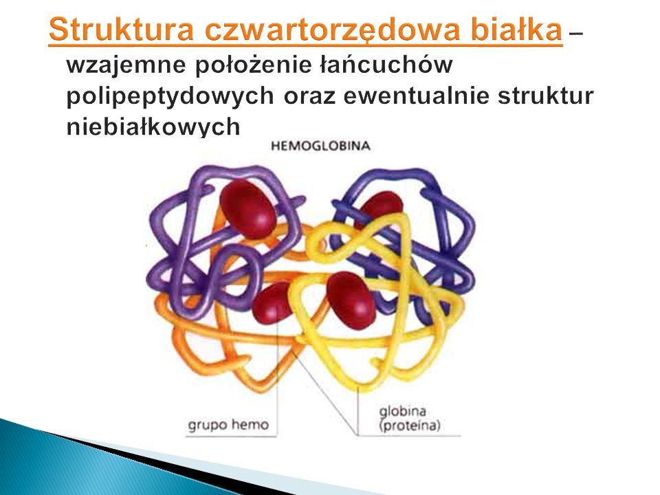 Struktura czwartorzędowa białka – wzajemne położenie łańcuchów polipeptydowych oraz ewentualnie struktur niebiałkowych