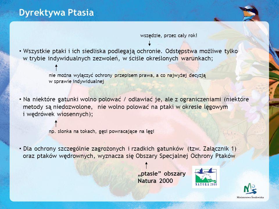 Dyrektywa Ptasia