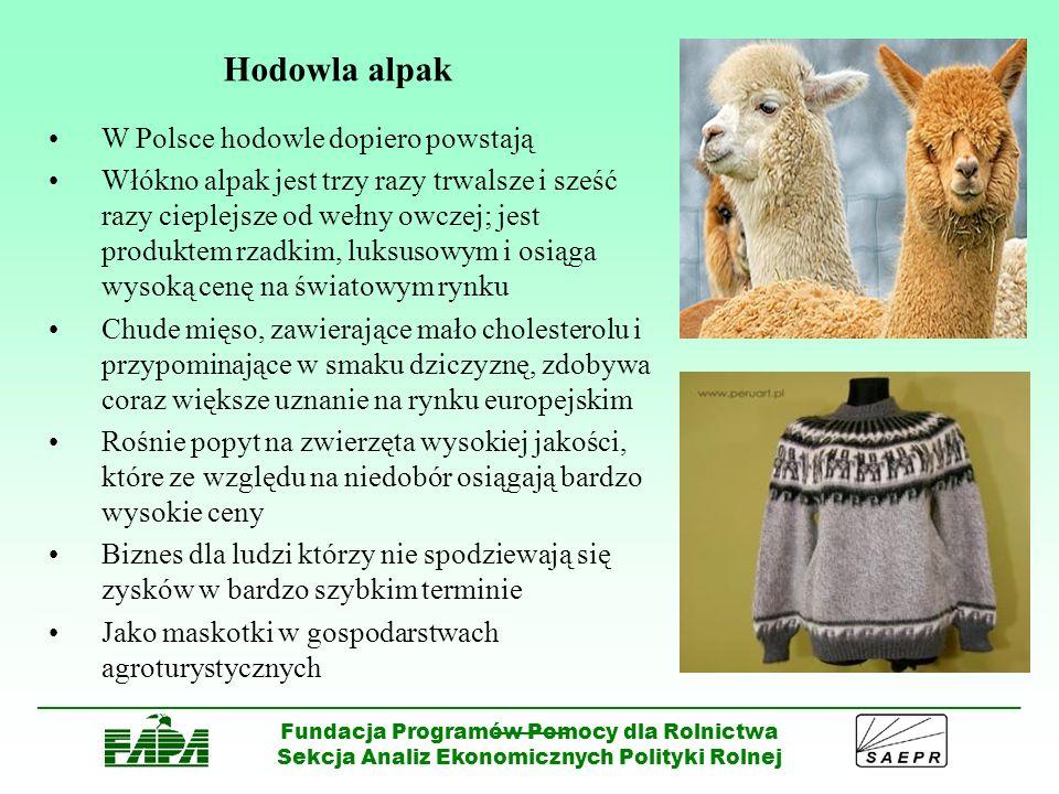 Hodowla alpak W Polsce hodowle dopiero powstają