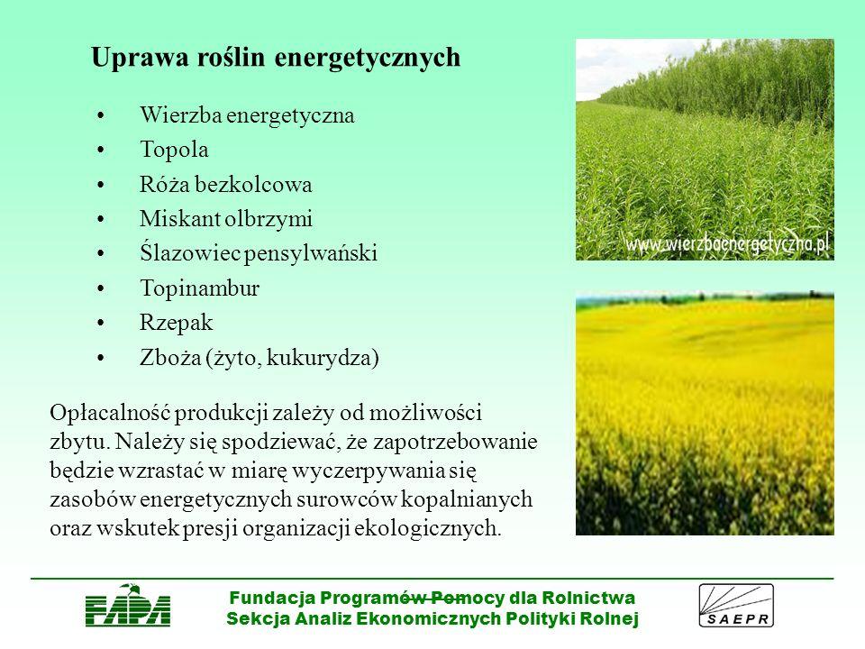 Uprawa roślin energetycznych