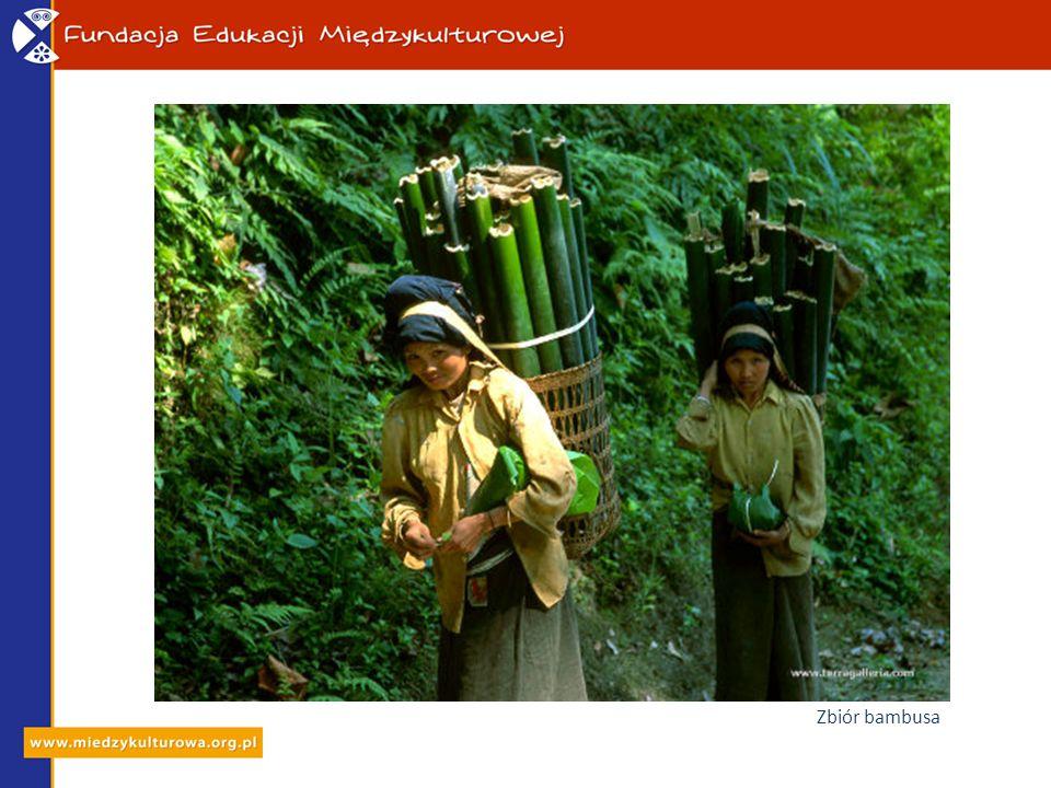 Zbiór bambusa