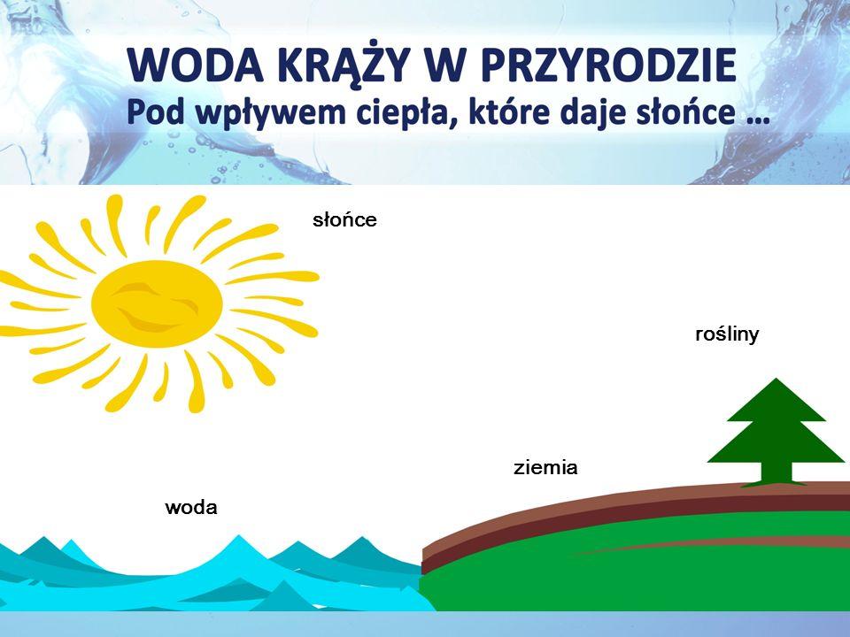 słońce rośliny ziemia woda