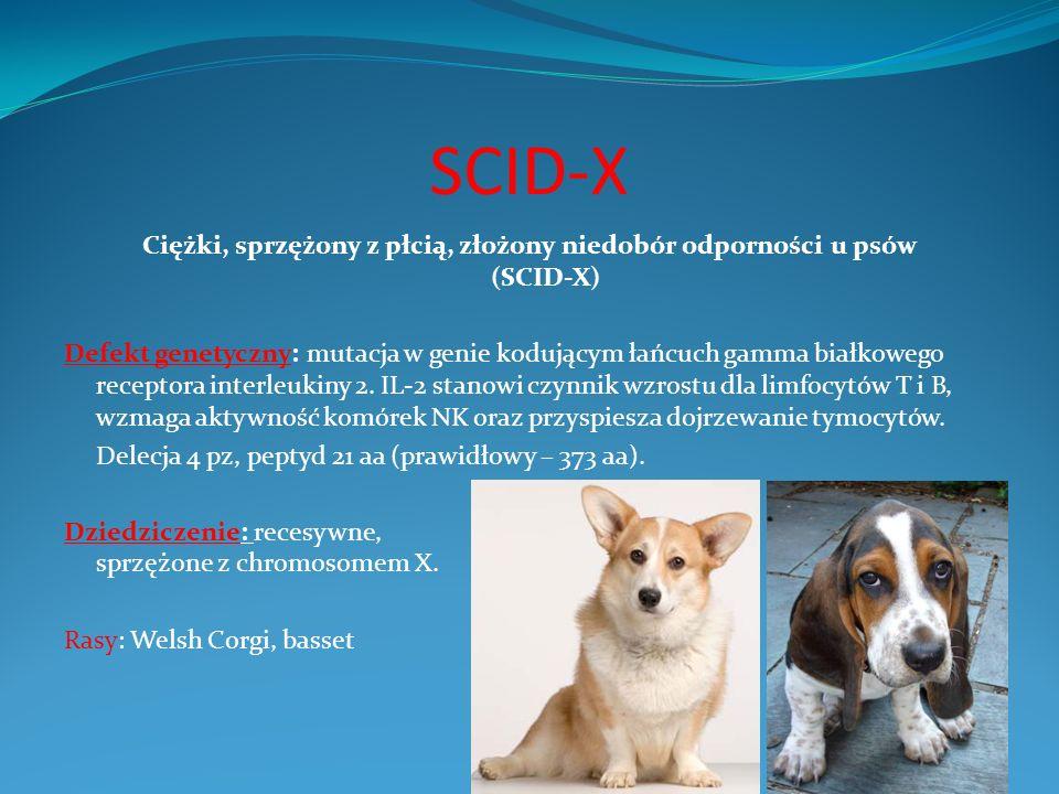 SCID-X