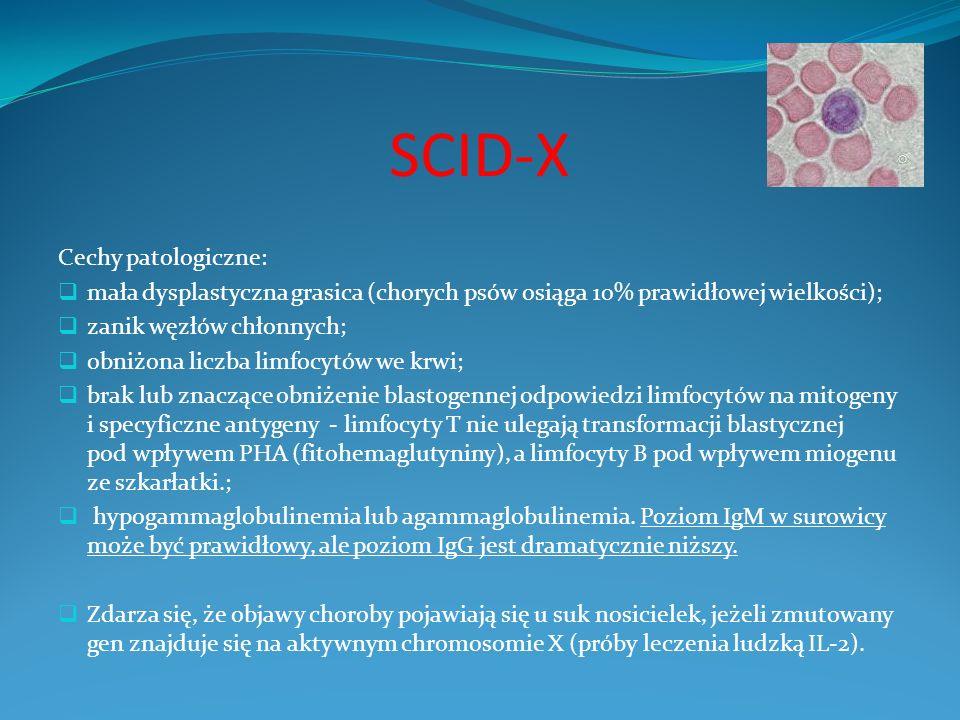 SCID-X Cechy patologiczne: