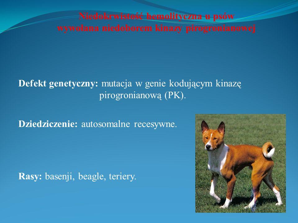 Niedokrwistość hemolityczna u psów wywołana niedoborem kinazy pirogronianowej