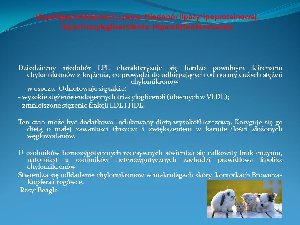 Hiperlipoproteinemia I u psów. Niedobór lipazy lipoproteinowej