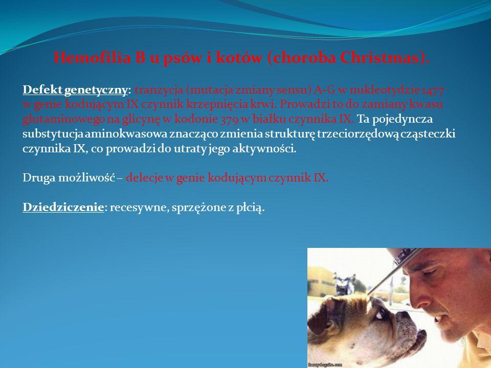 Hemofilia B u psów i kotów (choroba Christmas).