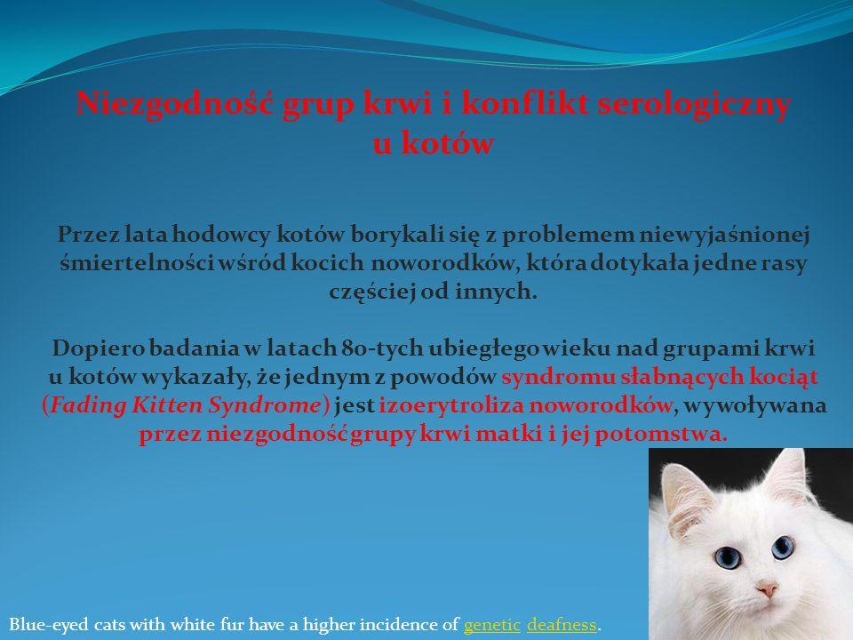 Niezgodność grup krwi i konflikt serologiczny u kotów