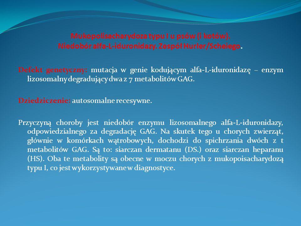 Mukopolisacharydoza typu I u psów (i kotów)