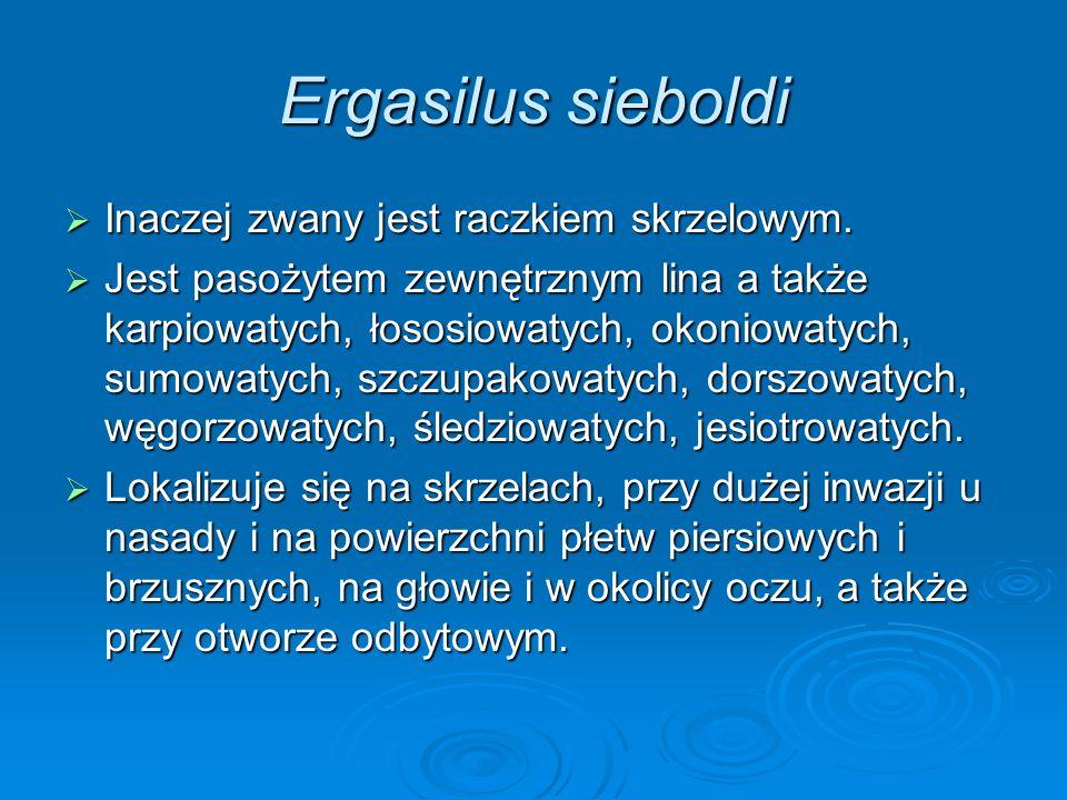 Ergasilus sieboldi Inaczej zwany jest raczkiem skrzelowym.