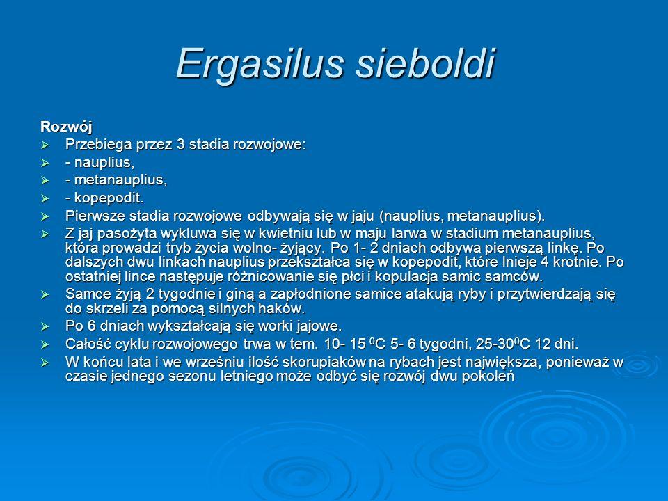 Ergasilus sieboldi Rozwój Przebiega przez 3 stadia rozwojowe: