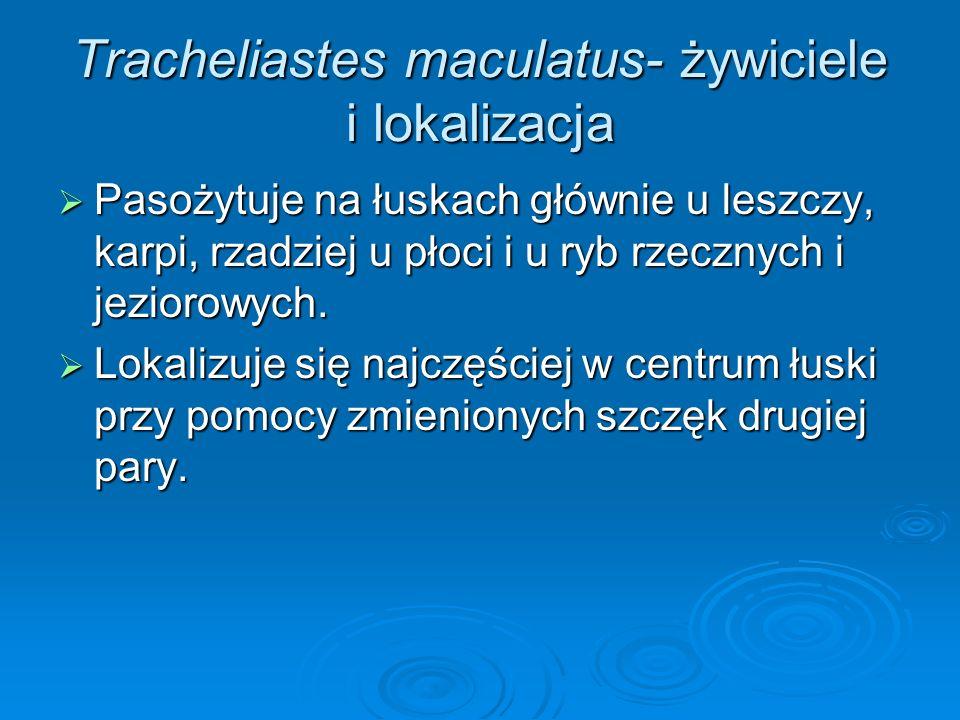 Tracheliastes maculatus- żywiciele i lokalizacja