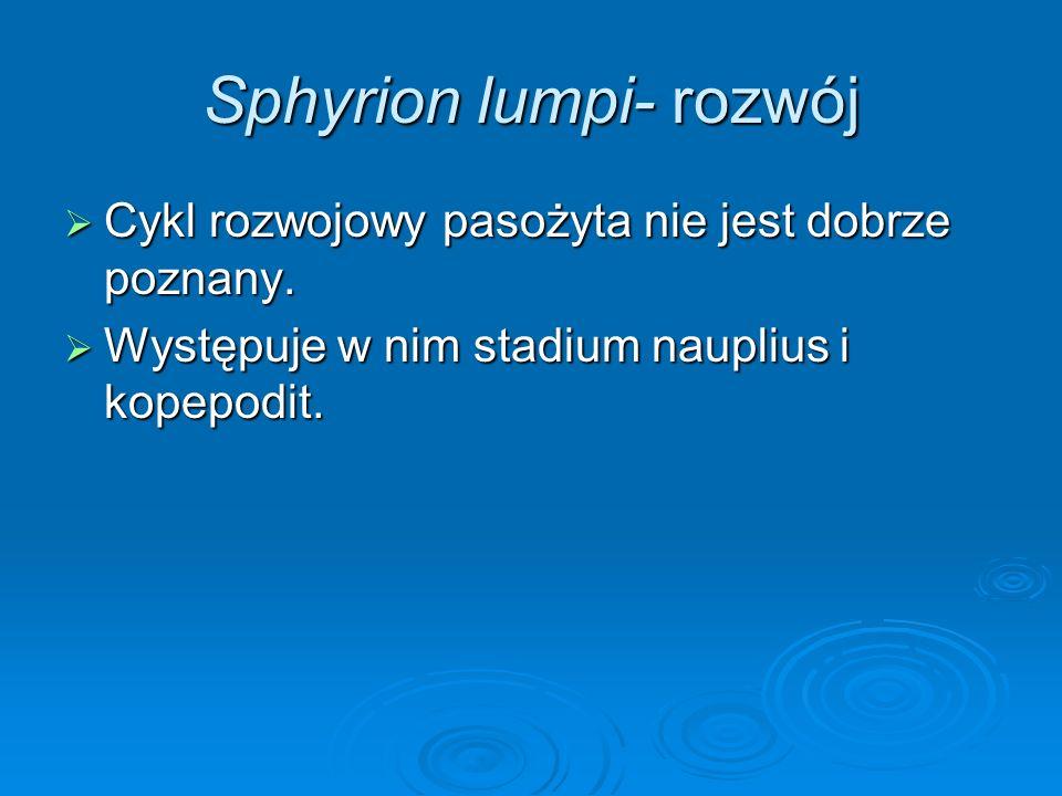 Sphyrion lumpi- rozwój