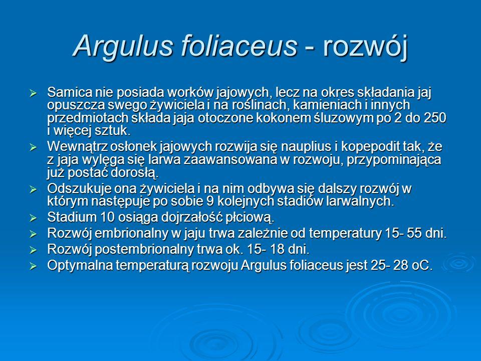 Argulus foliaceus - rozwój