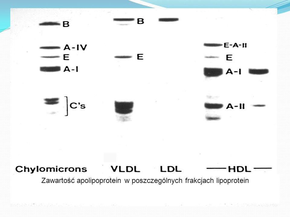 Zawartość apolipoprotein w poszczególnych frakcjach lipoprotein