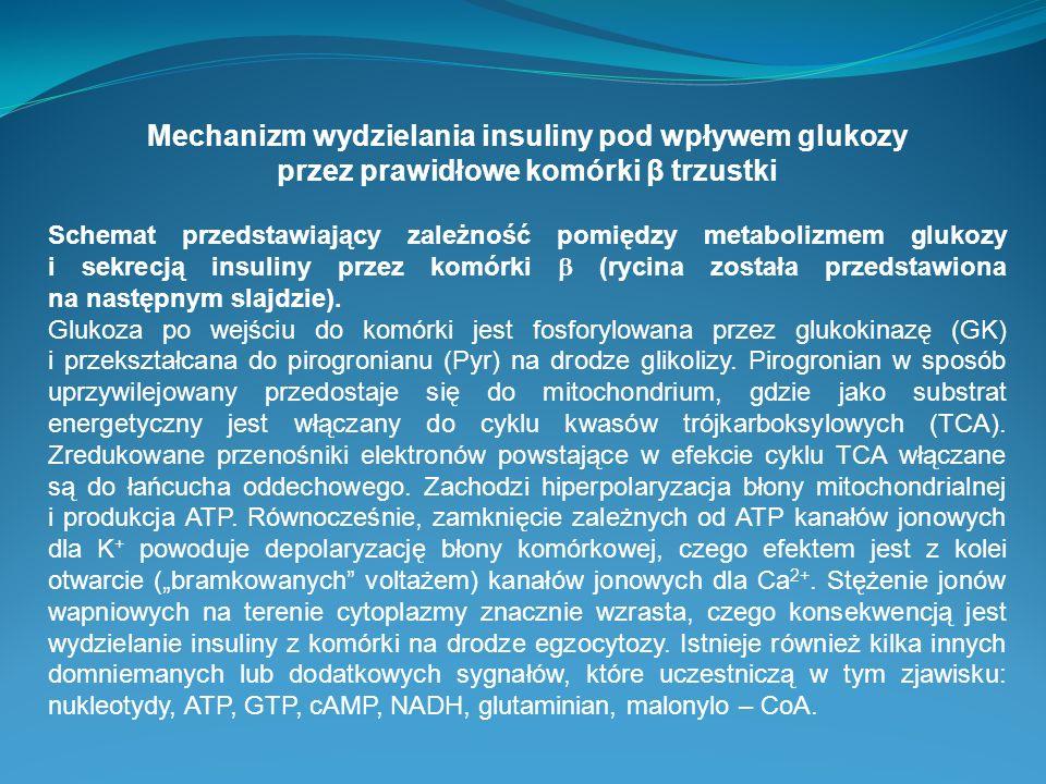 Mechanizm wydzielania insuliny pod wpływem glukozy przez prawidłowe komórki β trzustki
