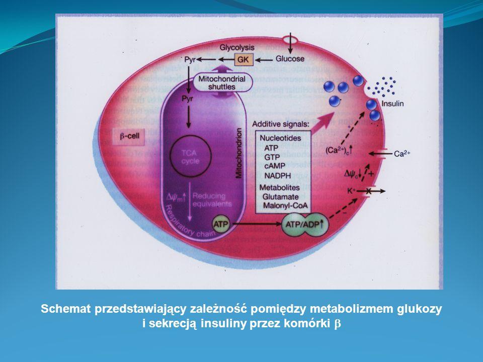 Schemat przedstawiający zależność pomiędzy metabolizmem glukozy i sekrecją insuliny przez komórki 
