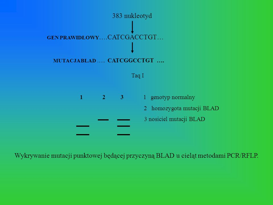 2 homozygota mutacji BLAD