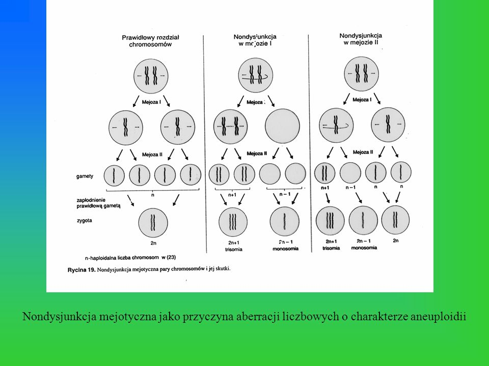 Nondysjunkcja mejotyczna jako przyczyna aberracji liczbowych o charakterze aneuploidii