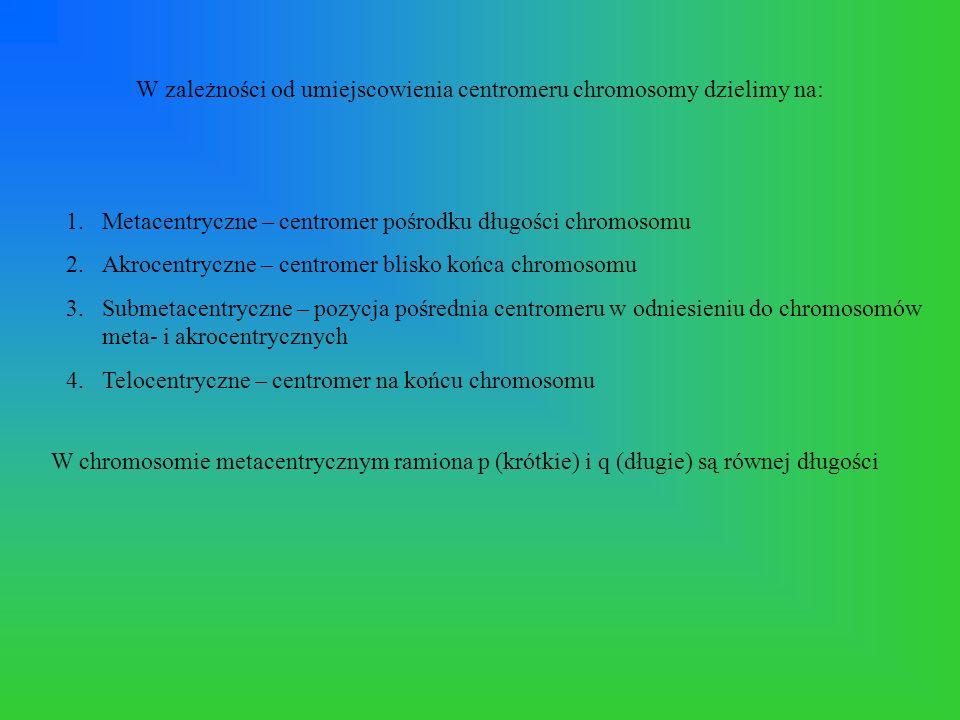 W zależności od umiejscowienia centromeru chromosomy dzielimy na: