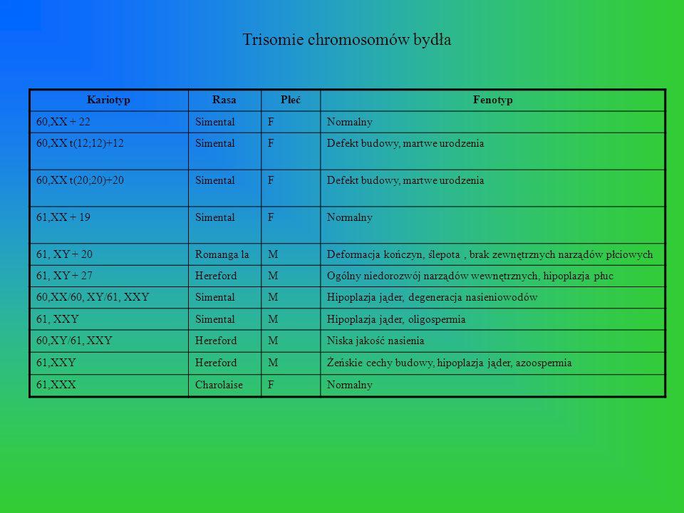 Trisomie chromosomów bydła