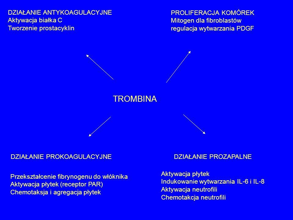 TROMBINA DZIAŁANIE ANTYKOAGULACYJNE Aktywacja białka C