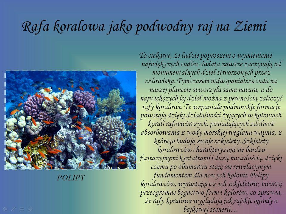 Rafa koralowa jako podwodny raj na Ziemi
