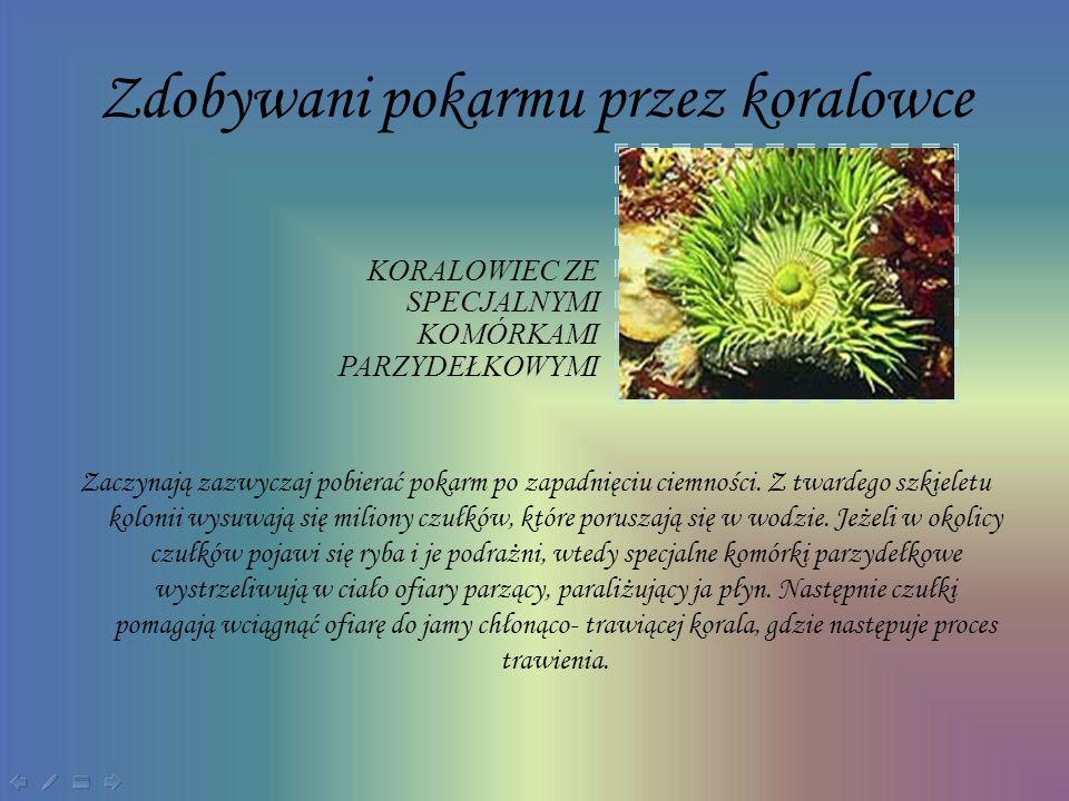 Zdobywani pokarmu przez koralowce