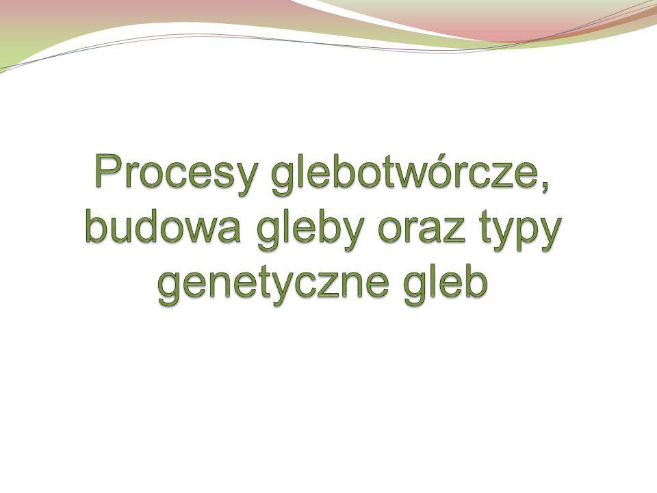 Procesy glebotwórcze, budowa gleby oraz typy genetyczne gleb