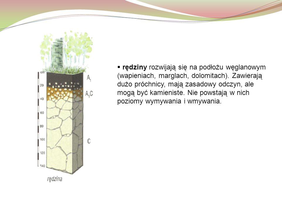 rędziny rozwijają się na podłożu węglanowym (wapieniach, marglach, dolomitach).