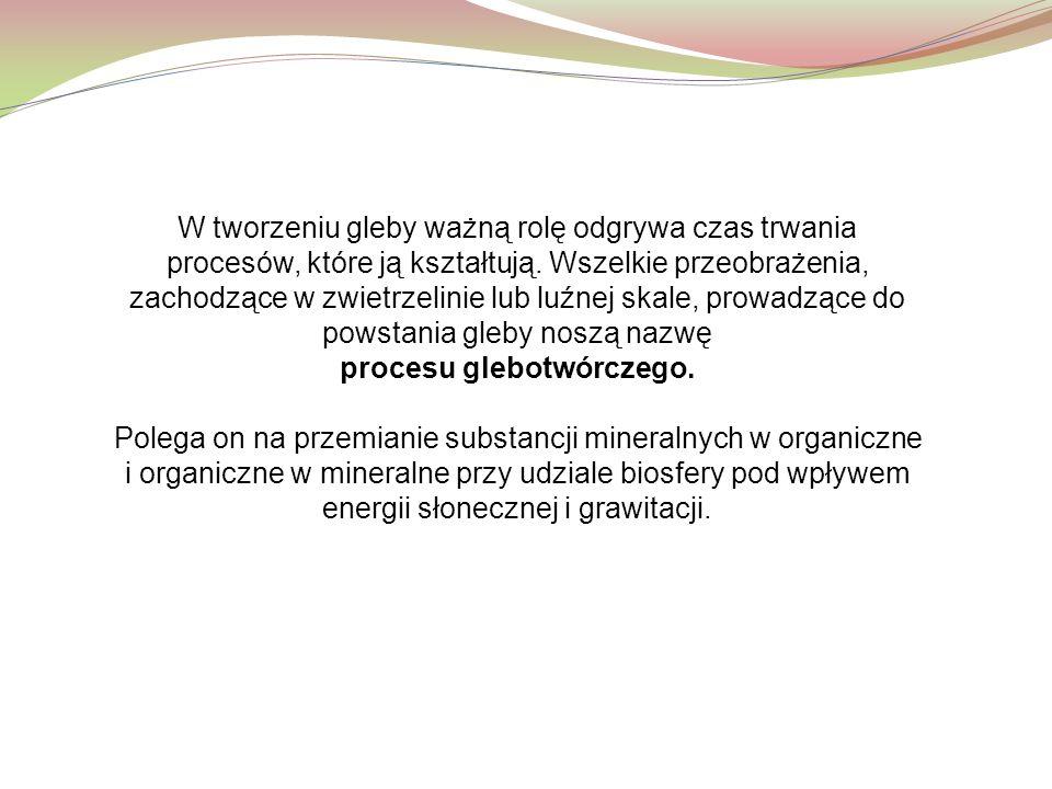 procesu glebotwórczego.