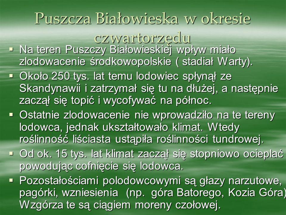 Puszcza Białowieska w okresie czwartorzędu