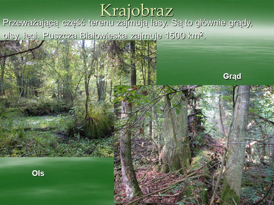 Krajobraz Przeważającą część terenu zajmują lasy. Są to głównie grądy,