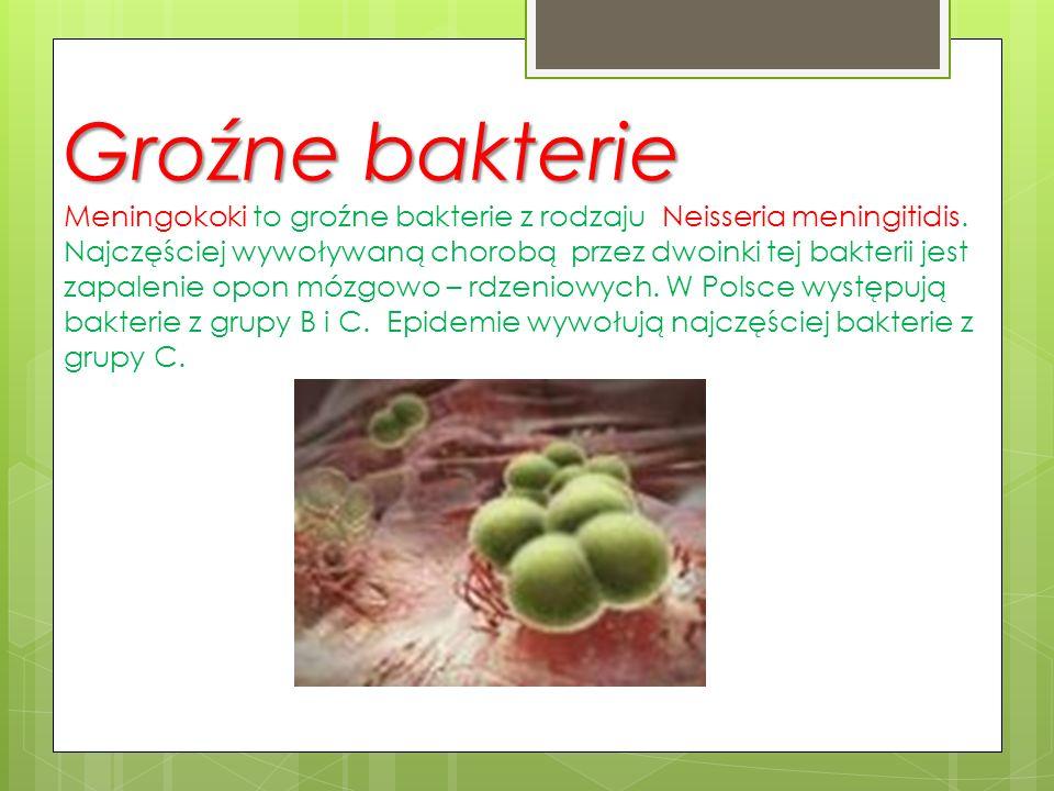 Groźne bakterie Meningokoki to groźne bakterie z rodzaju Neisseria meningitidis. Najczęściej wywoływaną chorobą przez dwoinki tej bakterii jest zapalenie opon mózgowo – rdzeniowych. W Polsce występują bakterie z grupy B i C. Epidemie wywołują najczęściej bakterie z grupy C.