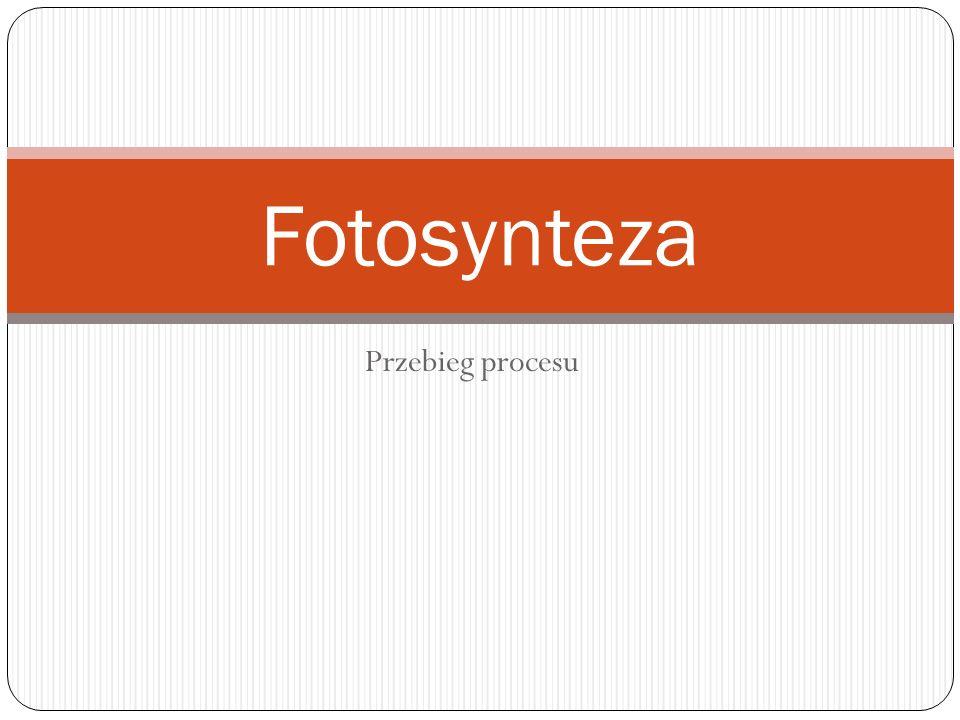Fotosynteza Przebieg procesu