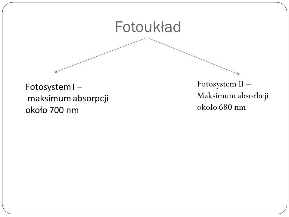 Fotoukład Fotosystem II – Fotosystem I –