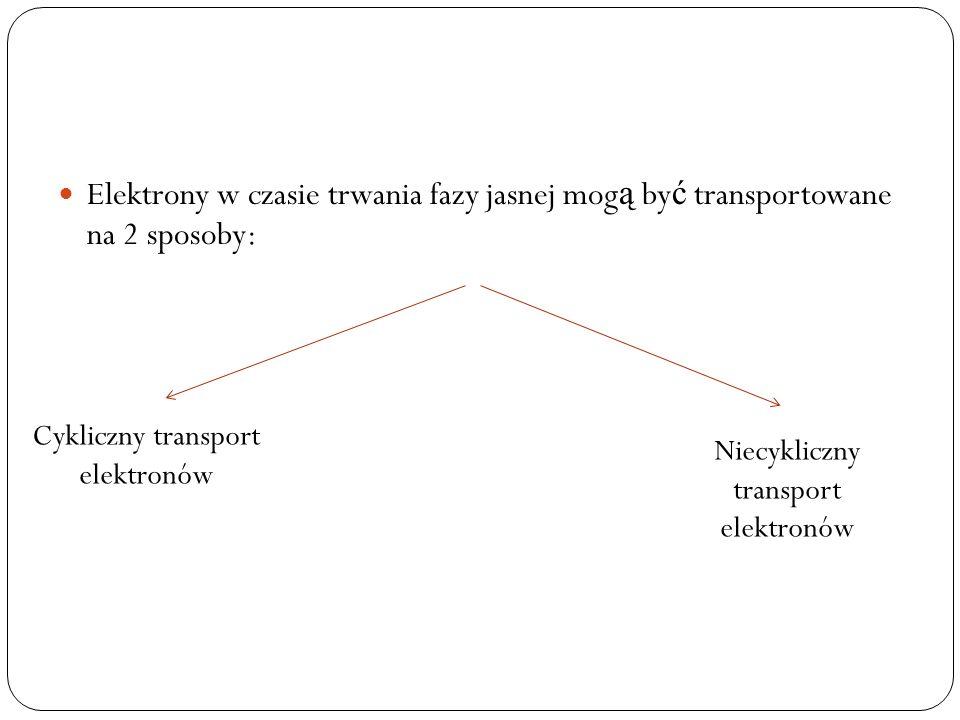 Elektrony w czasie trwania fazy jasnej mogą być transportowane na 2 sposoby: