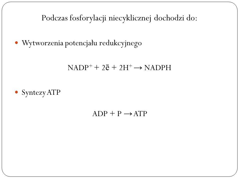 Podczas fosforylacji niecyklicznej dochodzi do: