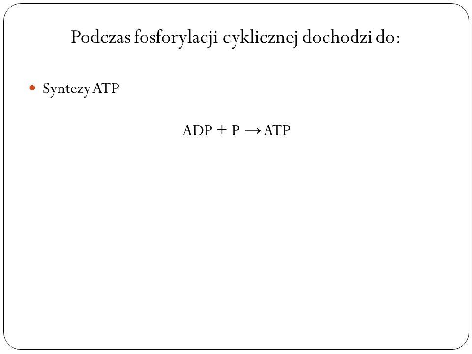 Podczas fosforylacji cyklicznej dochodzi do:
