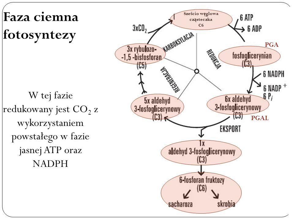 Sześcio węglowa cząsteczka