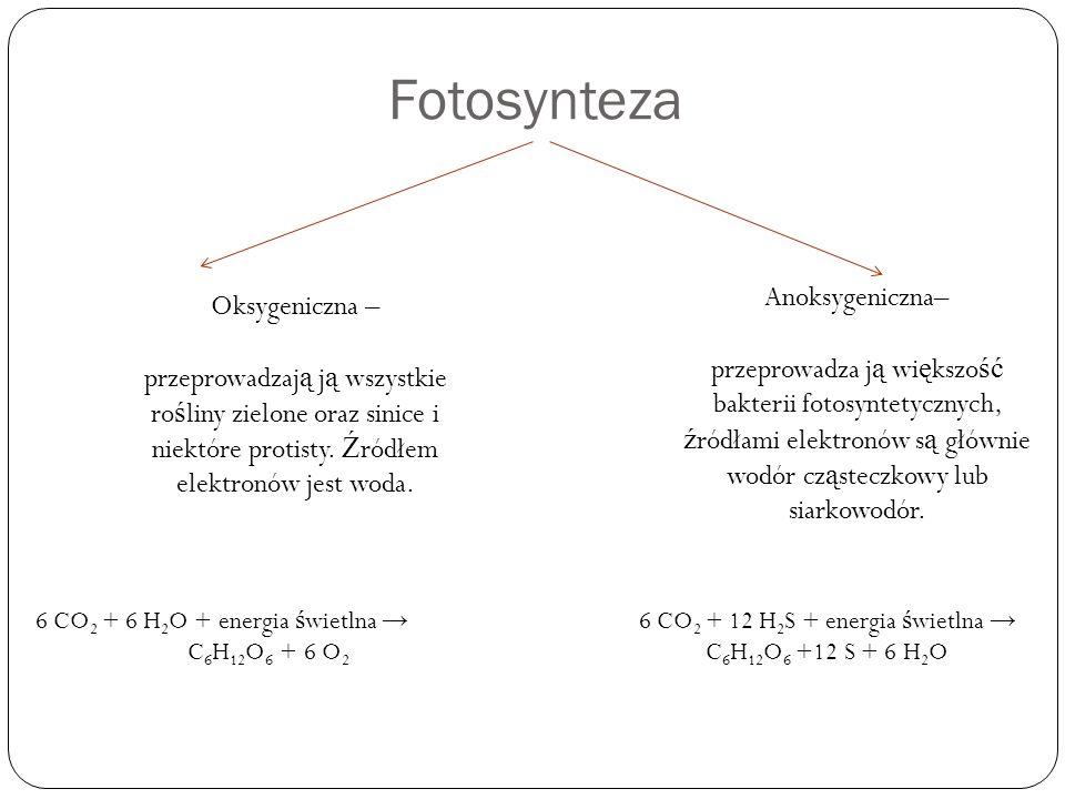 6 CO2 + 12 H2S + energia świetlna → C6H12O6 +12 S + 6 H2O