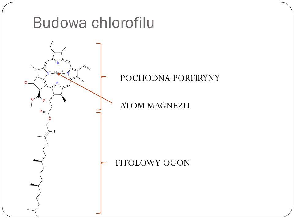 Budowa chlorofilu POCHODNA PORFIRYNY ATOM MAGNEZU FITOLOWY OGON