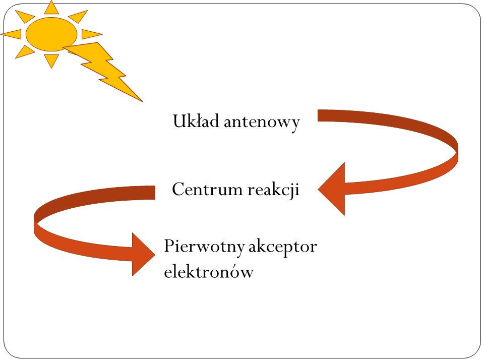 Układ antenowy Centrum reakcji Pierwotny akceptor elektronów